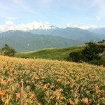 [花蓮]食べる花、金針花を見られる六十石山