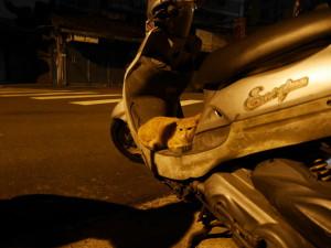 野良猫 in 台北のまちかど